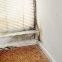 Health Hazards Associated With Mold In The Home