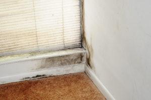 Black mold growing in corner near window